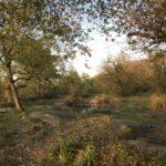 Forêt des Grand Avaux à Champcueil